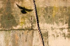 Shadow Series Seagulls  River wall 2