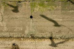 Shadow Series Seagulls River Wall 3