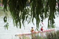 Kayakers under willow, Thames Series