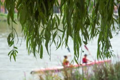 Kayakers and Willow Tree, Richmond, Thames Series